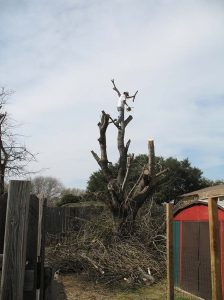 Tree Services & Tree Removal