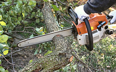 Tree-Trimming-Service