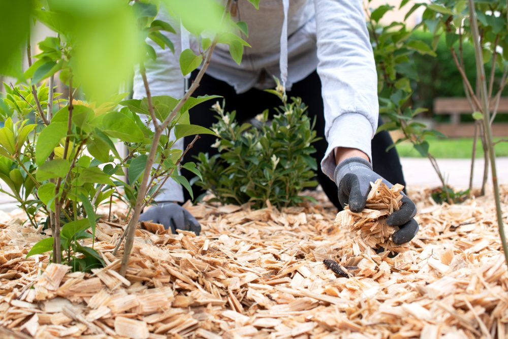 Mulching - The Ultimate Prep for Tree Health and Summer Heat